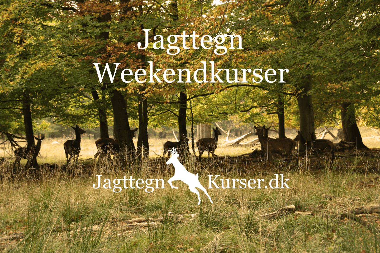 Lækker Jagttegn Weekendkursus 2020 | Foregår over 2 Weekender GJ-27