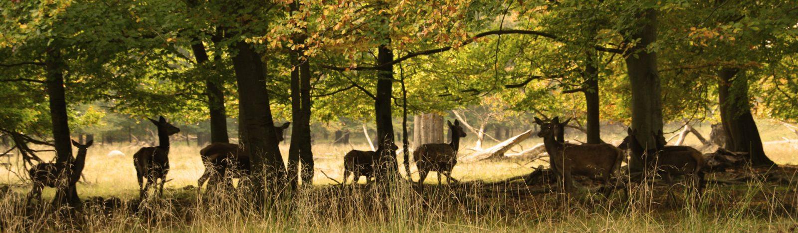 vildt i skoven